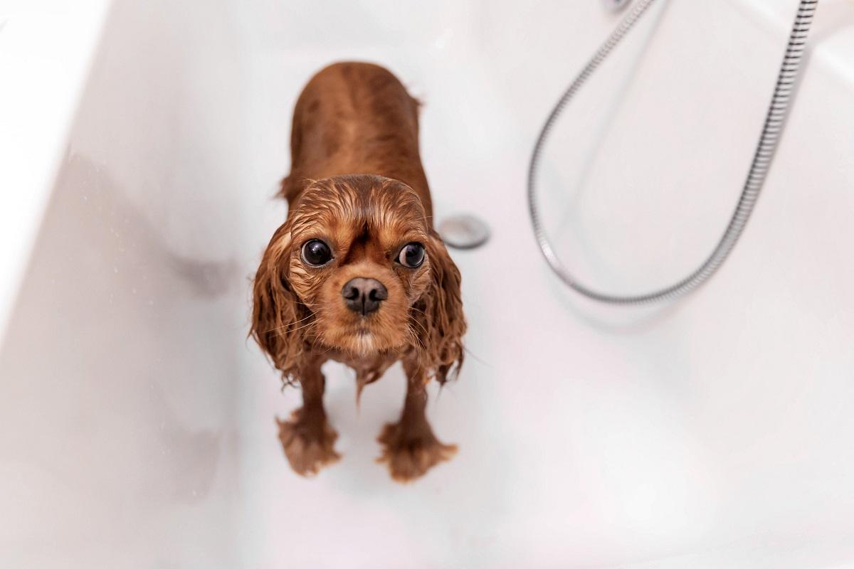 funny-wet-dog-in-bathtub